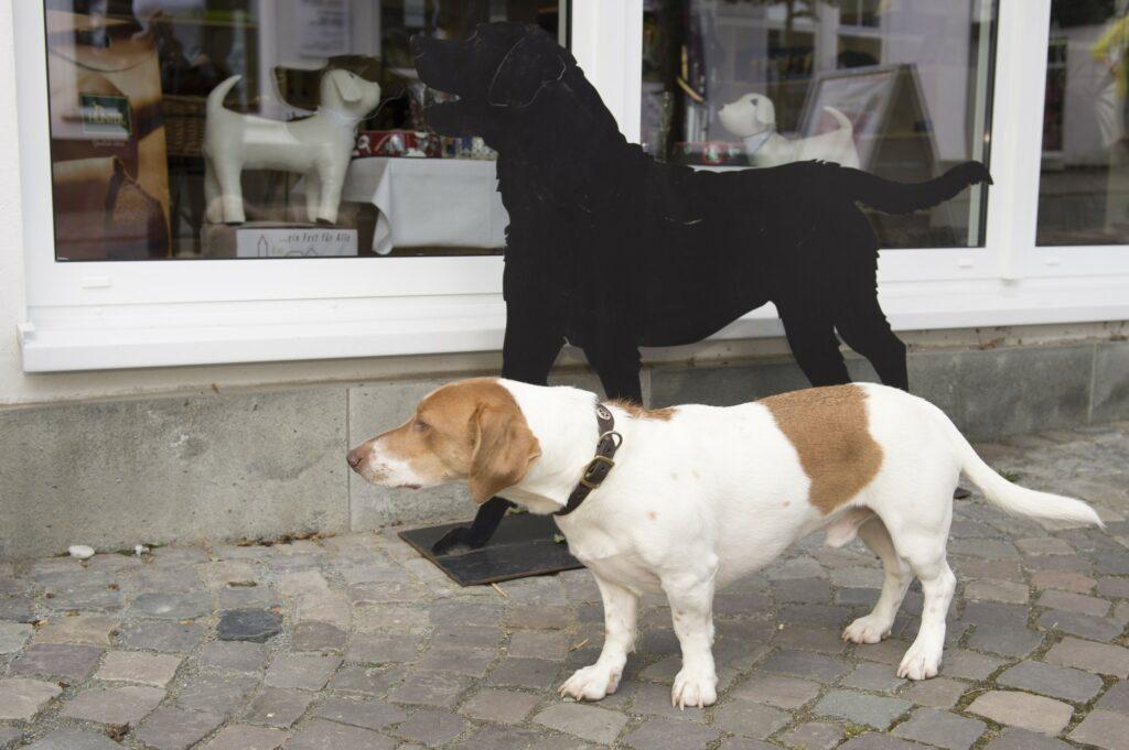 WOLL-Hund Emil unterwegs im Sauerland