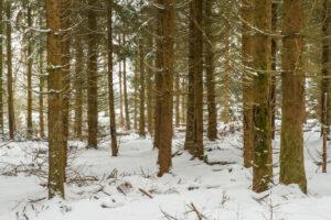 landesbetrieb-wald-holz-nrw-17 - Jahrespressegespräch des Forstamtes Oberes Sauerland