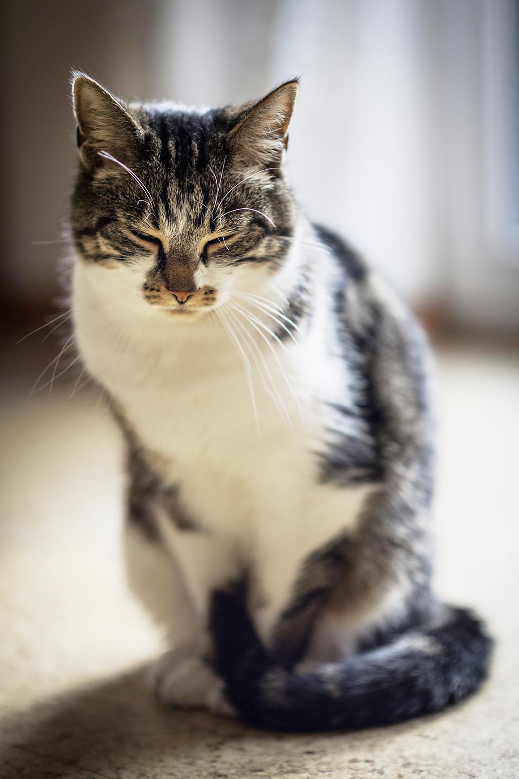 WOLL Sauerland Katze