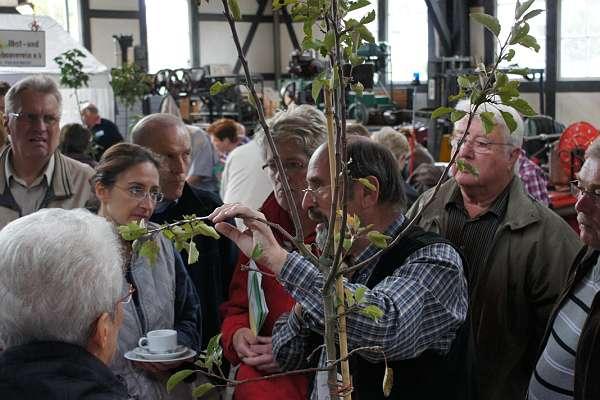 Olpe biologisch Obstbaumschnitt