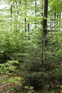 Mischwald-Bestand