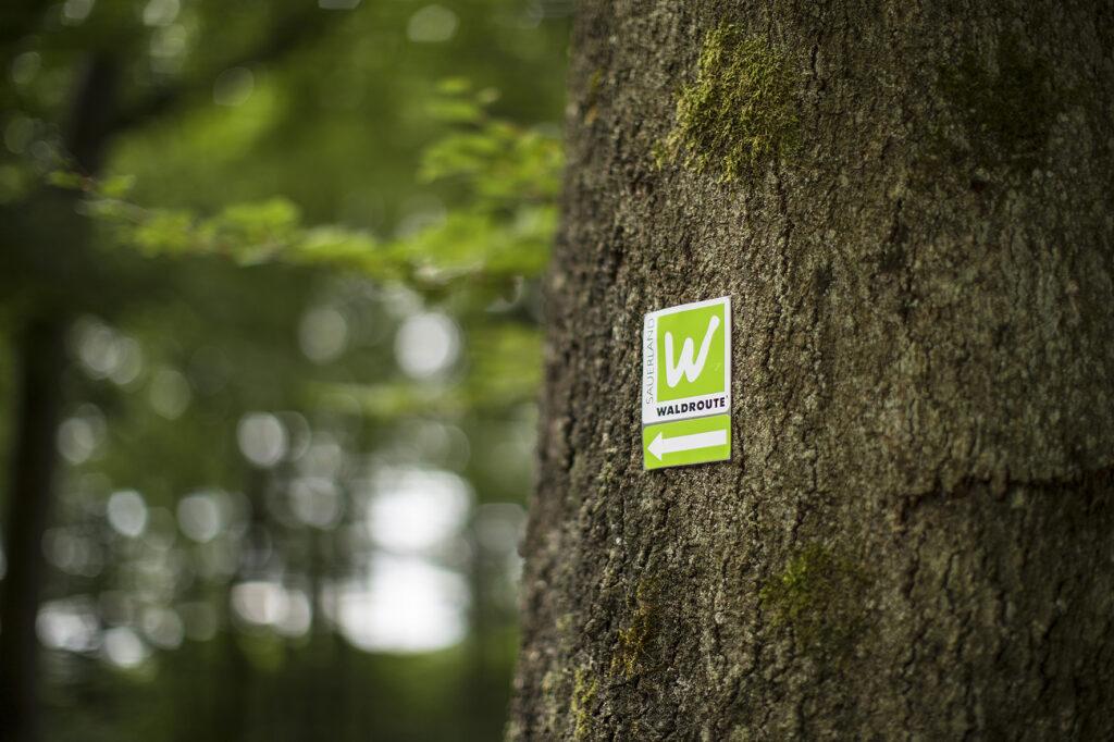 Das große W auf grünem Grund ist das Erkennungszeichen der Sauerland-Waldroute und führt zu spannenden Erlebnissen auch am Wegesrand. Erkennungszeichen der Sauerland-Waldroute Fotograf: sabrinity.com Location: Warstein