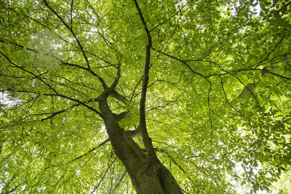 Sauerland-Waldroute bei Warstein Fotograf: sabrinity.com Location: Warstein