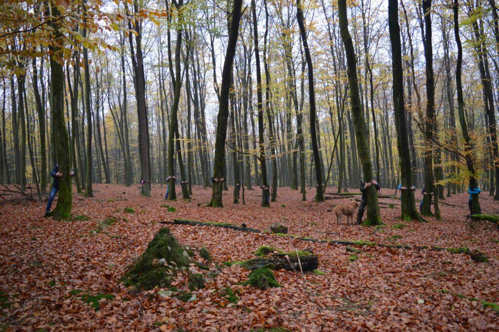Wie Waldbaden die Gesundheit fördert -Shirin Yuko im Arnsberger Wald