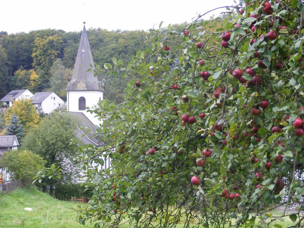 """Viele alte Obstbäume prägen das Ortsbild. Jedes Jahr im Herbst pressen die Helmeringhäuser ihre Äpfel zu Saft. Ein zweiter Spitzname ist deshalb das """"Saftkaff"""