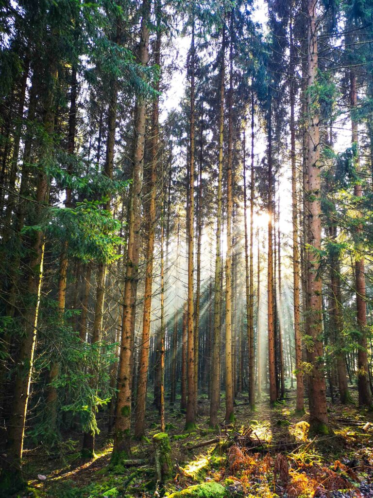 Das Ende der Monokulturen: Neue Bäume braucht das LandWie das Lehr- und Versuchsforstamt Arnsberg den Wald retten will