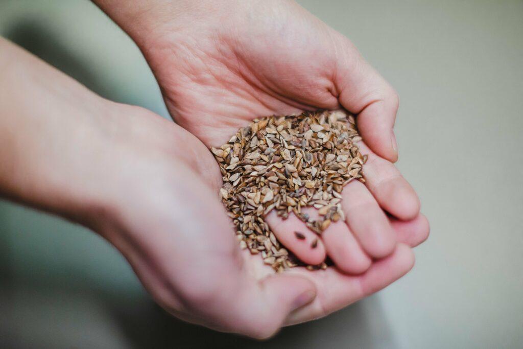 Saatgut für die genetische Vielfalt unserer Wälder Eine Tonne Gehölzsaaten lagern im Lehr- und Versuchsforstamt Arnsberg
