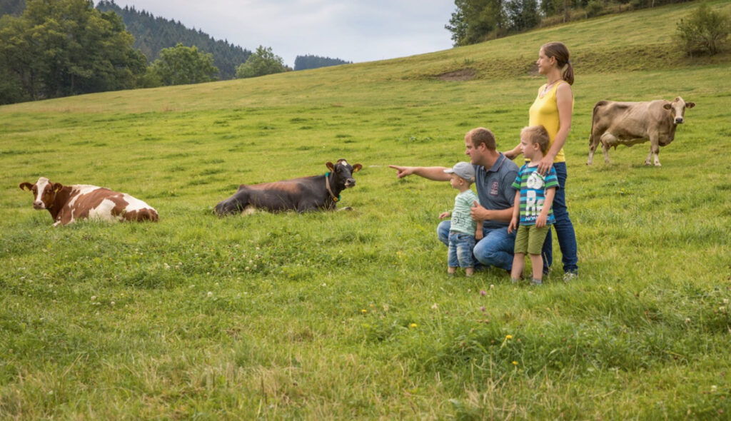 Familie Voß mit ihren Milchkühen auf der Wiese.