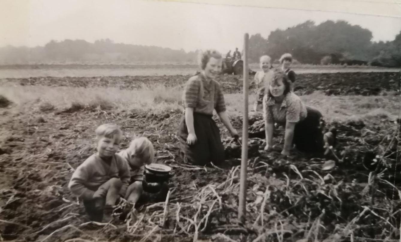 Frauen bei der Kartoffelernte (1957)