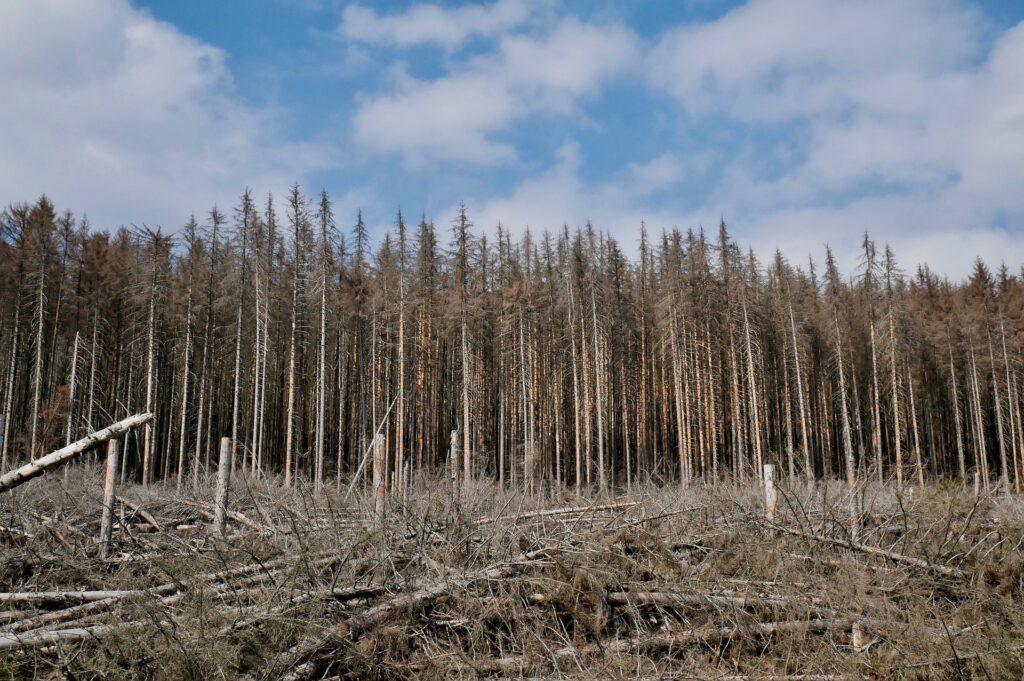 Unser Wald leidet.