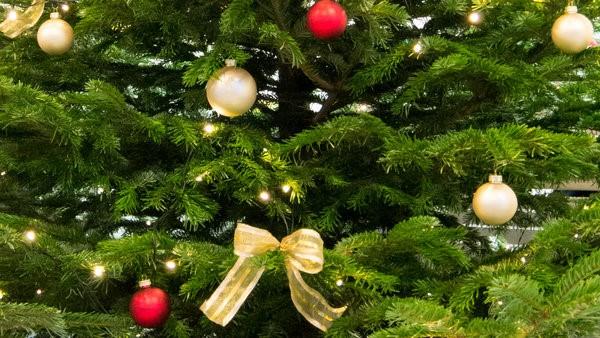 """""""Oh Tannenbaum, oh Tannenbaum, wie grün sind deine Blätter"""": Mit unseren Pflegetipps bleibt der Weihnachtsbaum lange grün, frisch und wohlriechend.  Foto: Verband Wohneigentum NRW e.V."""