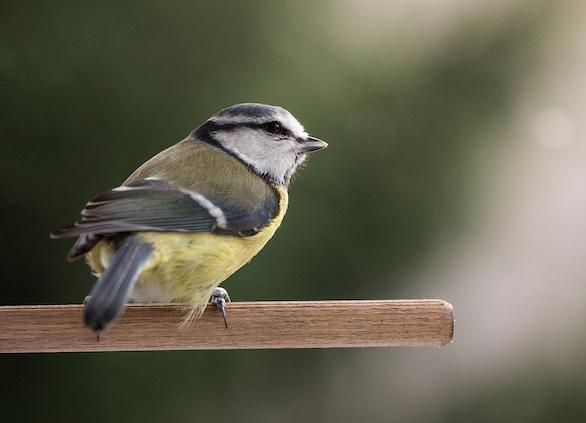 Vogelgezwitscher Foto: Simon Föster